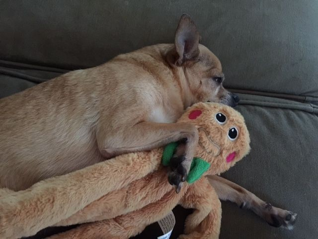 Photo of Ashleys pet dog with toy - How to navigate self doubts and connect online with Ashley Hurley - Pushing The Edge with Greg Curran