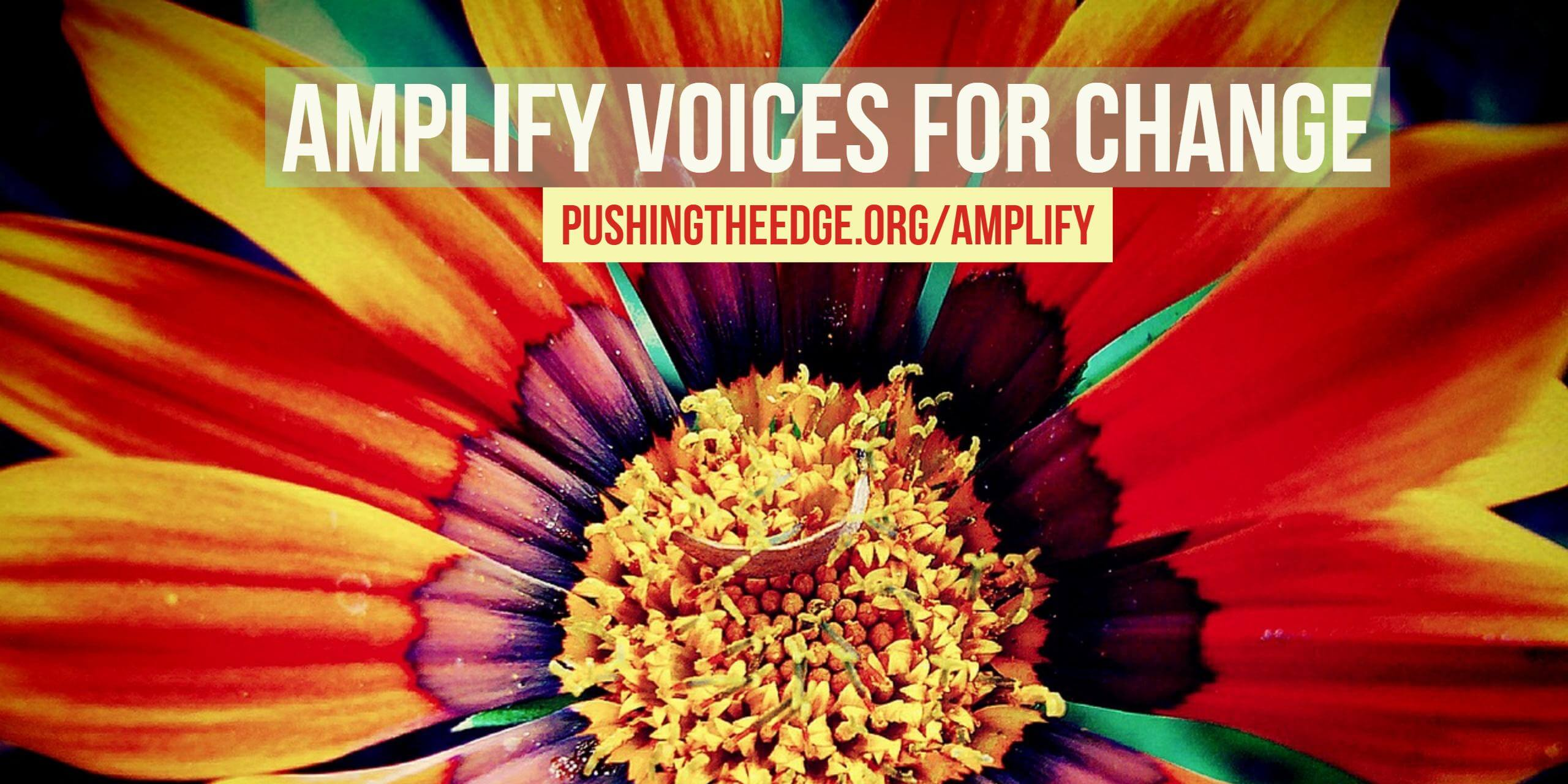 Amplify voices for change